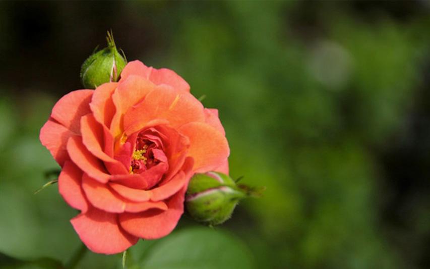 Gardens_By_The_Bay_Flowers_Christmas_Wonderland_2015_singapore_ashlogue.com_